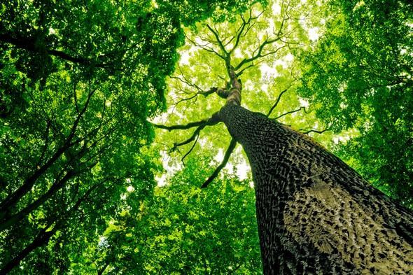 krasa nedotcene prirody